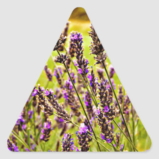 Magic Lavender Triangle Sticker