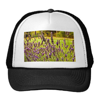 Magic Lavender Trucker Hat