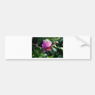 Magic orchid bumper sticker