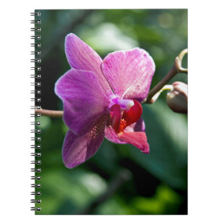 Magic orchid notebook