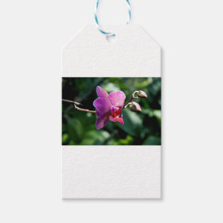 Magic orchid pack of gift tags