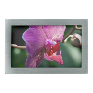 Magic orchid rectangular belt buckle