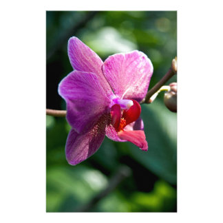 Magic orchid stationery paper