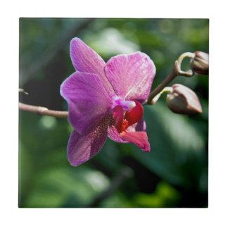 Magic orchid tile