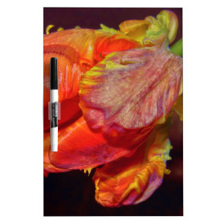 Magic talk Tulip Dry Erase Board