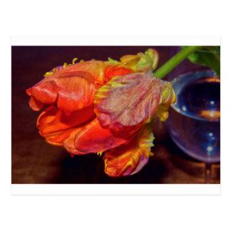 Magic talk Tulip Postcard