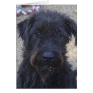 Magic, the Giant Schnauzer Greeting Card
