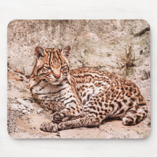 magical felines mouse pad