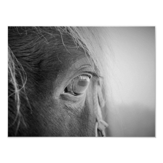 Magical Horse black and white Poster