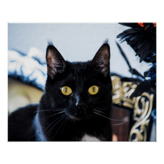 magical kitty eyes poster
