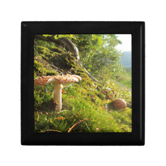 Magical Mushrooms 1 Gift Box