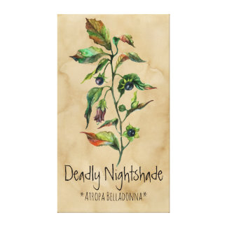 Magical Plants Belladonna 21.17'' x 37.58'' Canvas