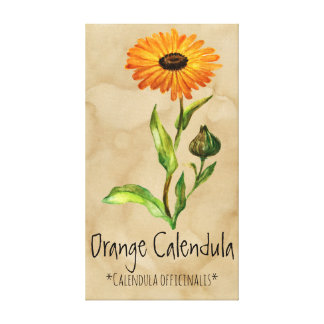 Magical Plants Calendula 11.95'' x 21.71'' Canvas
