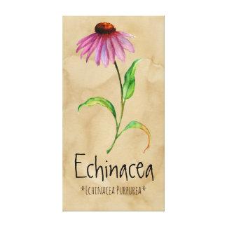 Magical Plants Echinacea 13.22'' x 25.52'' Canvas