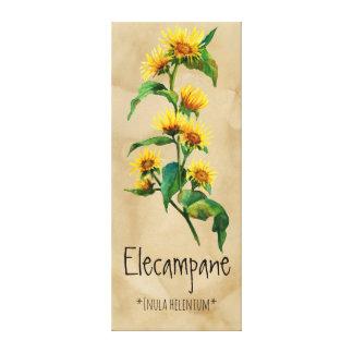 Magical Plants Elecampane 16.32'' x 39.22'' Canvas