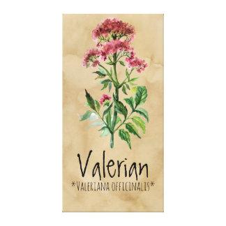 Magical Plants Valerian 21.29'' x 42.05'' Canvas