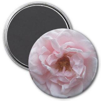 Magnet - Blush Pink Rose