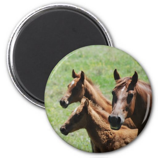 Magnet - Chestnut Mare & Foals
