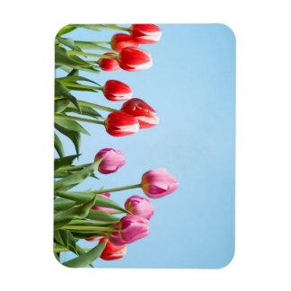 Magnet de tulipes de ressort