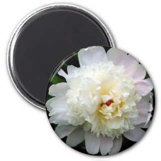 Magnet, Double White Peony Magnet