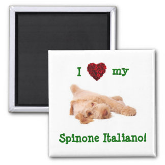Magnet, featuring gorgeous Spinone puppy l Magnet