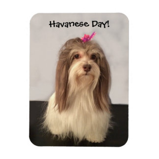Magnet, HAVANESE DAY! by Nancy Lee Garrett Magnet
