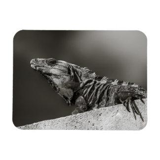 Magnet - Iguana on Wall - Riviera Maya, Mexico