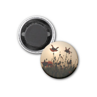 Magnet in the corn poppy Design 08
