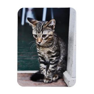 Magnet: Kitten Magnet
