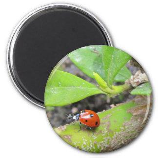 Magnet--Ladybug Magnet