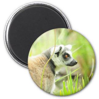 Magnet -Lemur- Ring Tailed