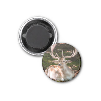 magnet photo stag under wood