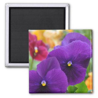 Magnet: Purple Pansies Square Magnet