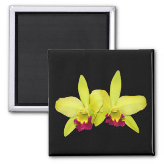 Magnet, square, 2 yellow-green cattleyas magnet
