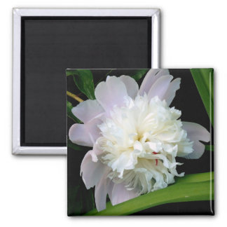 Magnet, Square Double White Peony Magnet