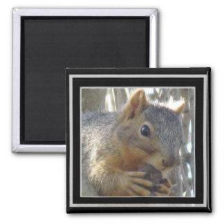 Magnet - Squirrel in Black Frame