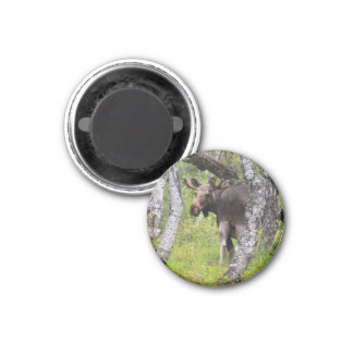 Magnet with moose 04