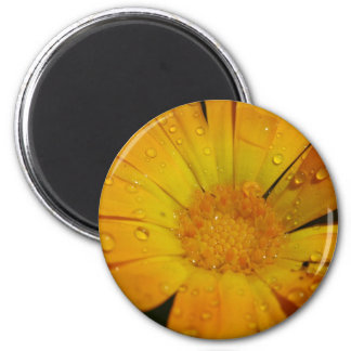 Magnet - Yellow flower with water drops