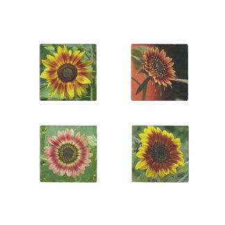 Magnets sunflowers