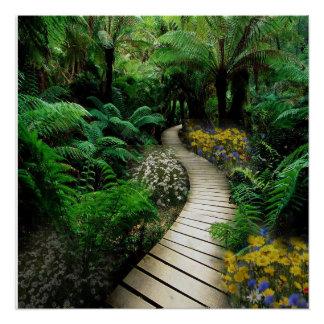 Magnificent Boardwalk Through A Fern Forest Poster