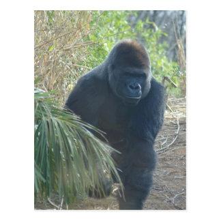 Magnificent Mountain Gorilla Postcard
