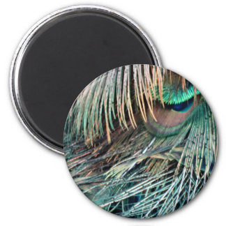 Magnificent Peacock  Feather 2 Inch Round Magnet