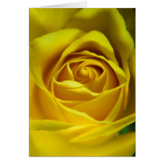 Magnificent yellow rose macro picture card