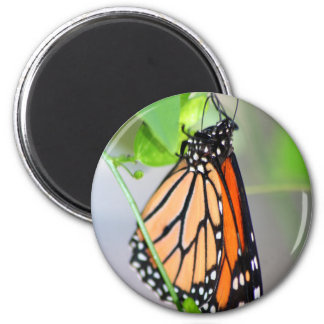 Magnifico Monarch magnet