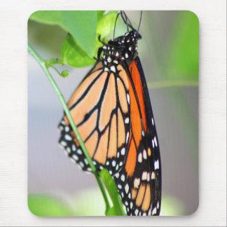Magnifico Monarch mousepad