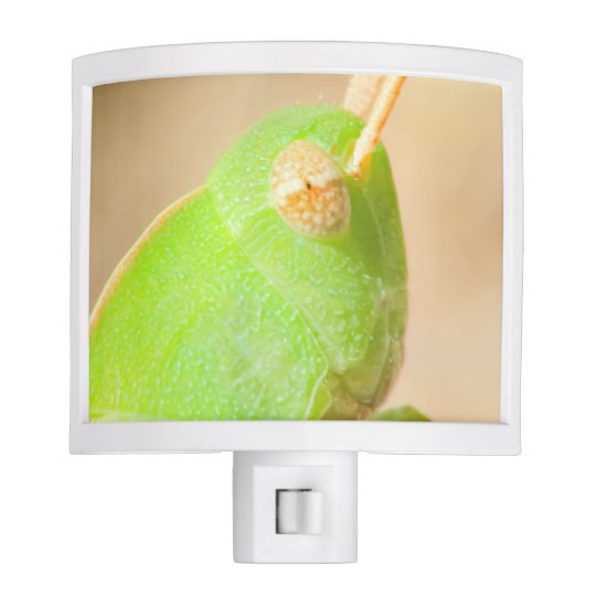 Magnified Grasshopper Night Light