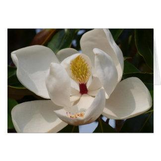 Magnolia 72 card