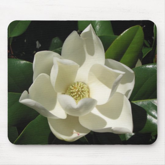 Magnolia Bloom Mouse Pad