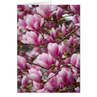 magnolia blooming  on tree card