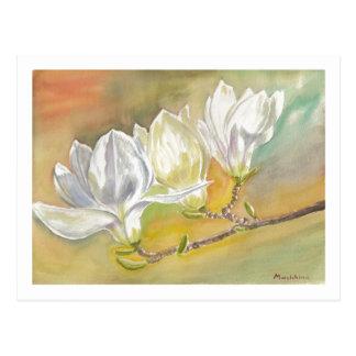 Magnolia Blooming Watercolor by E.Mashkina Postcard